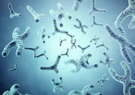 XY-chromosomes