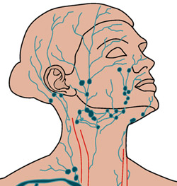Lymphatic system and sagging skin