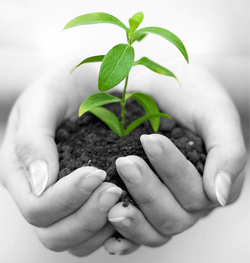 Five Best with plant stem cells April 2013