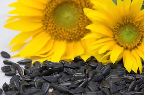 Sunflower Seeds octadecenedioic